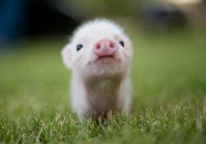 cute-baby-animals-10