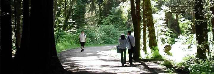 Stanley-Park-trails-720-250